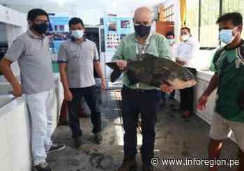 Ministro Quijandría supervisó la producción de alevinos en Iquitos - INFOREGION