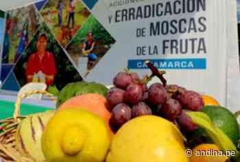 Cajamarca: 31601 productores se benefician con plan de erradicación de mosca de la fruta - Agencia Andina