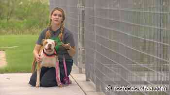 Adoption fees waived or reduced as some animal shelters reach capacity in North Texas