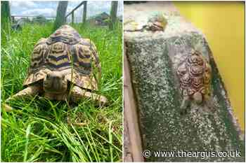 Sybil the sliding tortoise video goes viral in Sussex
