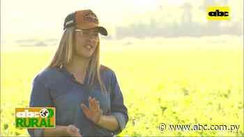Abc Rural: Producción de Chía, su desarrollo y oportunidades del cultivo - ABC Rural - ABC Color