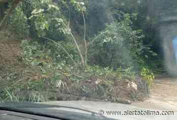 Lluvias de las últimas horas generaron caída de varios árboles en Ibagué - Alerta Tolima