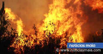 Incêndio consome área florestal perto do Aeródromo da Maia - Notícias Maia