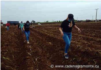 Trabajo voluntario: digno homenaje joven a Maceo y el Che desde Camagüey (+ Fotos) - Radio Cadena Agramonte