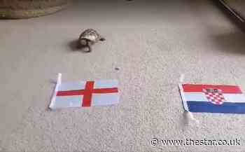 Sheffield nurse's 'mystic' tortoise predicts Euro 2020 results - here's what he thinks will happen to England - The Star