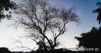 Domingo registra a madrugada mais fria do mês em Brusque - O Munícipio