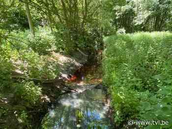 Oliespoor van wel tien meter lang in Simsebeek in Alken - TV Limburg