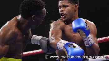 Stevenson claims WBO jnr lightweight belt - The Maitland Mercury