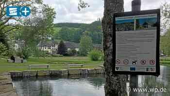 Finnentrop: Schlingnatter verhindert Waldsofas in Fretter - WP News