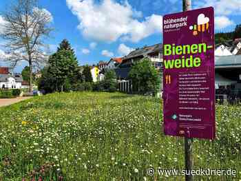 Schonach: Insekten können in Schonach jetzt auf blühenden Wiesen weiden – Die Bürger säen fleißig mit - SÜDKURIER Online