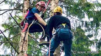 Baumrettung: Bergwacht Harz trainiert in Thale für Rettungseinsätze - MDR