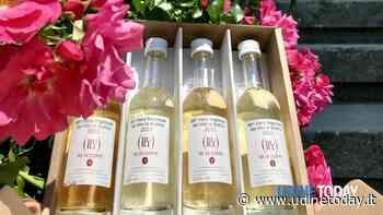 Degustare il vino online? Novità alla Fiera di Buttrio - UdineToday