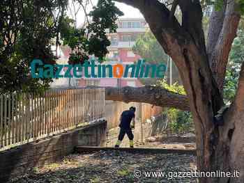Giarre, ramo di pino precipita a terra. Intervento dei VvF - Gazzettinonline