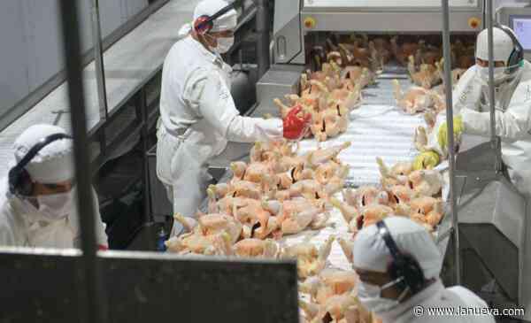 Carne aviar: la Argentina reanudará las exportaciones a la Unión Europea