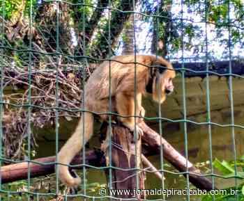 Programa permite que empresas e moradores 'adotem' recintos do Zoológico de Piracicaba - jornaldepiracicaba.com.br