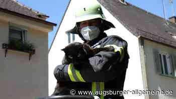 Die Augsburger Feuerwehr rettet Kater Oskar vom Dach