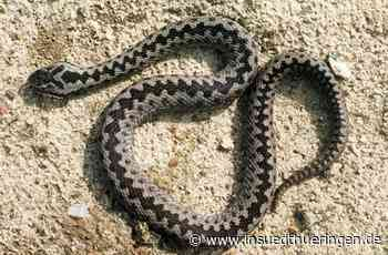 Ein Promille hat gereicht - Mann fährt Schlangenlinien - inSüdthüringen