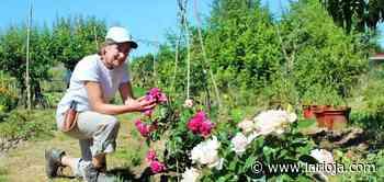 Las flores inglesas de Ribafrecha - La Rioja
