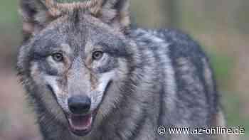 Cuxhaven: Wolf auf Autobahn überfahren - az-online.de