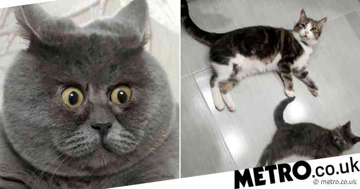 Kitten with permanently-startled expression saved by neighbour's cat who licked him back to life
