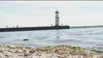 Lachine residents hope to give their lighthouse area a major revamp - CTV News Montreal