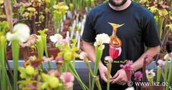 Rettet die Zucht fleischfressende Pflanzen? - Ludwigsburger Kreiszeitung