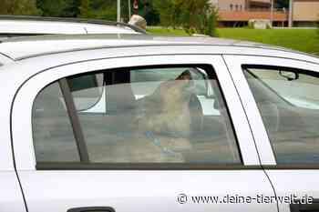 Fast 50 Grad: Polizistin rettet Hund in Ludwigsburg aus Hitze-Auto - DeineTierwelt Blog