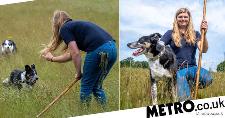 Deaf dog learns sign language to help owners herd sheep
