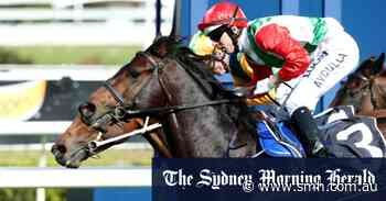 Rebel Shadow unlikely to show too much respect for elders at Warwick Farm - Sydney Morning Herald