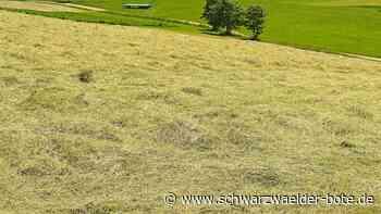 Sonne ist der wichtigste Erntehelfer - Heuernte läuft in Niedereschach auf Hochtouren - Schwarzwälder Bote