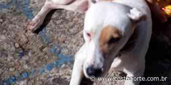 Família procura por pitbull desaparecida, em Praia Grande (SP) - Jornal Costa Norte