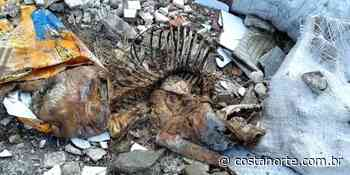 Terreno macabro vira cemitério clandestino de animais, em Praia Grande (SP) - Jornal Costa Norte