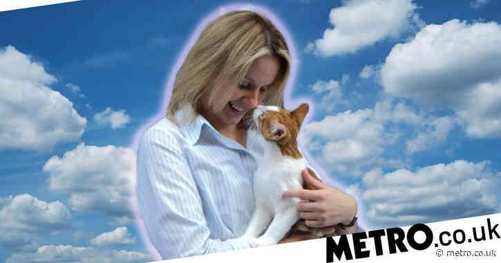 Cat-lover lands her dream job as a feline behaviourist