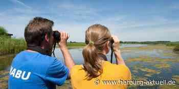 Neustart beim NABU: Vogelkundliche Spaziergänge unter Auflagen wieder - Harburg aktuell
