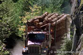 Squamish Nation calls for old-growth logging moratorium in its territory - Parksville-Qualicum Beach News