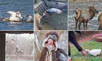 Amateur photographers share wildlife snaps capturing animals in hilarious predicaments - Daily Mail