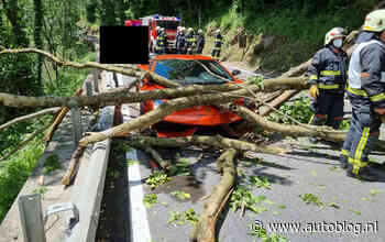 Lamborghini Gallardo wordt slachtoffer van vallende boom - Autoblog.nl