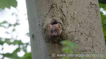 Hoog in de boom zitten niet alleen vogels - Omroep Gelderland