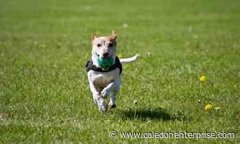 WHAT'S GOING ON HERE? Caledon chases Bolton dog park facelift - Caledon Enterprise
