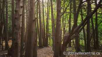 Stittsville still awaiting purchase agreement to acquire Shea Woods - StittsvilleCentral.ca