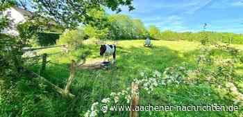 Roetgen: Pferdewiese wieder im Bauausschuss - Aachener Nachrichten