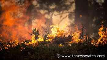 Crews battle Nipigon-area wildfires - Tbnewswatch.com