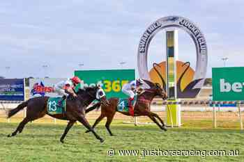 Adelaide Ace back in form with Swan Hill Cup win - Just Horse Racing