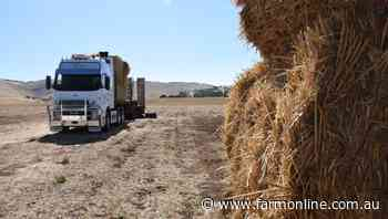 Mice causing significant fodder damage