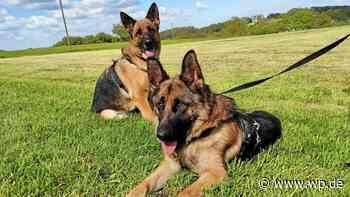 Marsberg: Hunde aus Tierschutz nach drei Tagen wieder allein - Westfalenpost