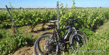 Déambulation œnotouristique sur le territoire du Cognac - Le Figaro