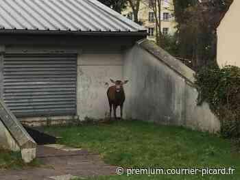 Le maire de Pont-Sainte-Maxence a interdit la chasse à courre près des habitations, la justice vient de lui donner raison - Courrier Picard