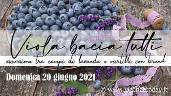 Escursione a Marostica tra campi di lavanda e mirtilli con brunch - VicenzaToday