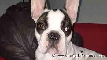 Cutral Co: Les robaron hasta el perro - Mejor Informado