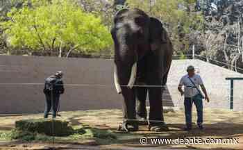 Santuario de Big Boy en Culiacán podría ser un centro de investigación y educación de vida silvestre - Debate